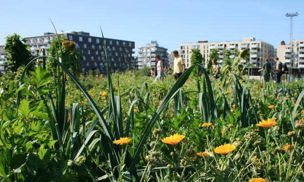 Urbant landbruk på Losæter.