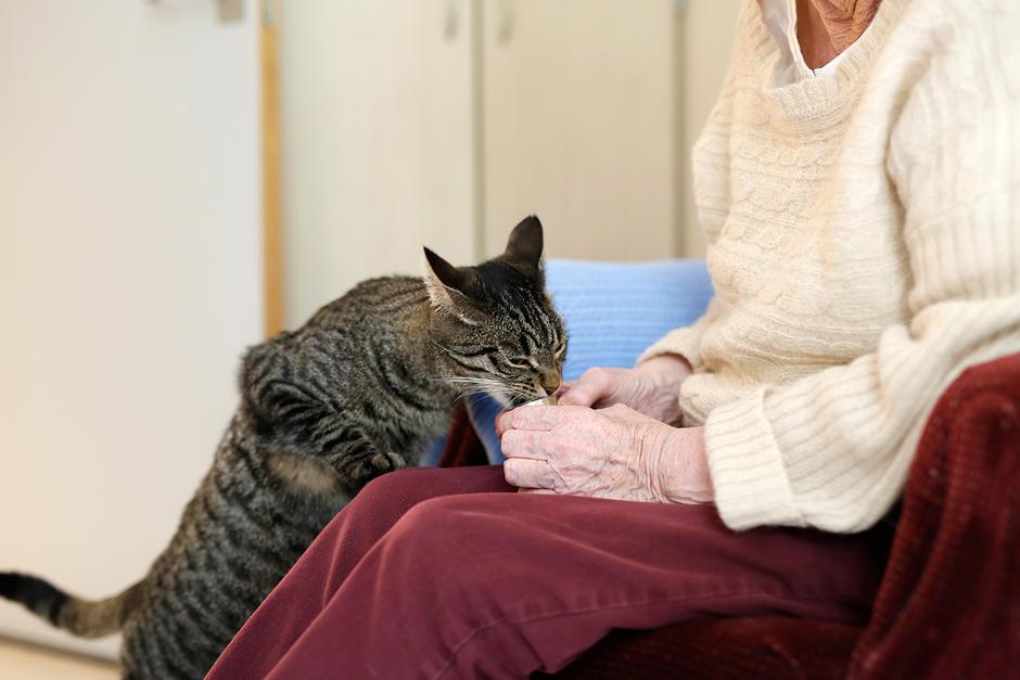Sagenehjemmets katt får en godbit av en beboer