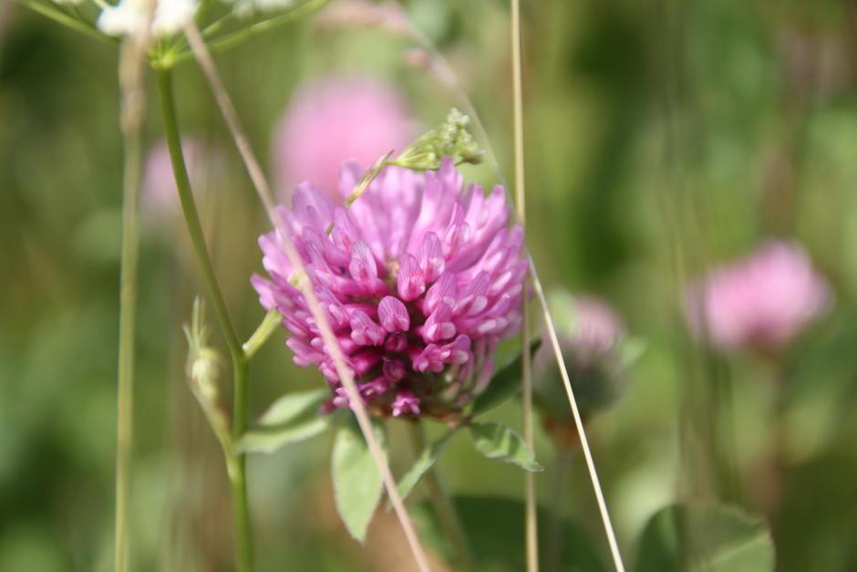 Blomst i Skar leir