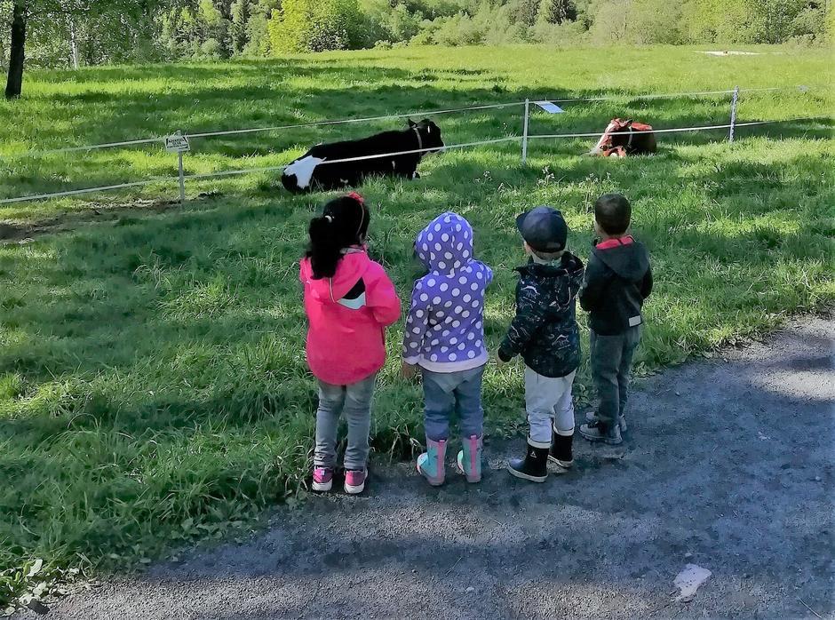 barn ser på kyrene på beitet