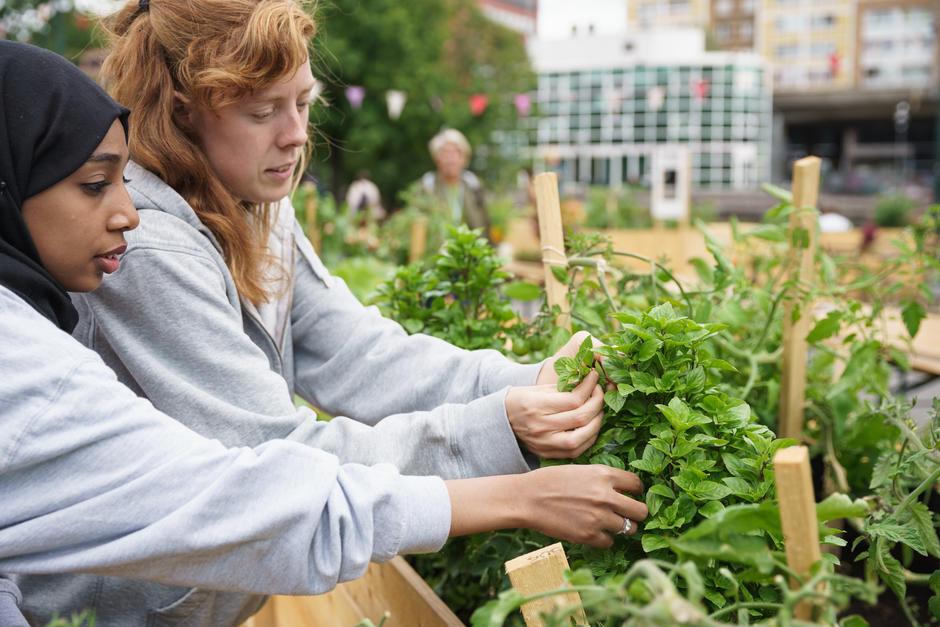 Ungdom høster basilikum fra dyrkekassene på Vaterland