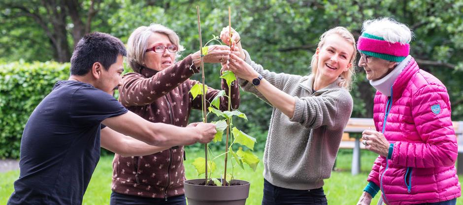 En mann og tre kvinner i ulike aldre er ute i hagen og jobber med en stor plante.