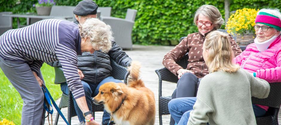 En lysebrun og mellomstor hund hilser på fem personer som står og sitter ute i hagen.
