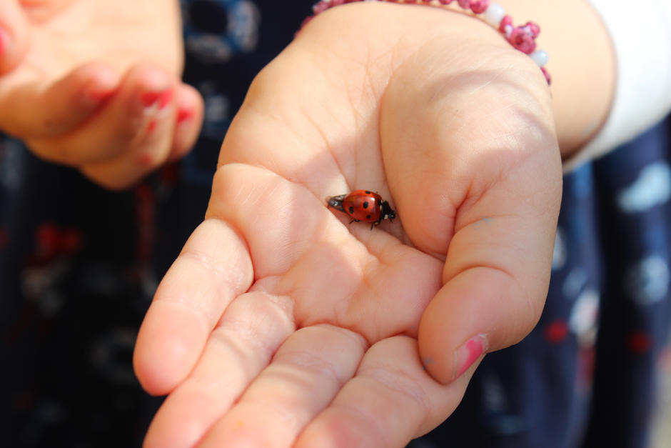 Barnehånd med marihøne