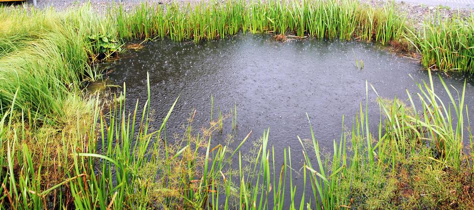 Salamanderdammen i regnvær