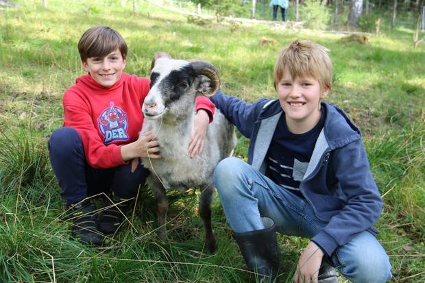 Bilde av noen elever på Sørli besøksgård