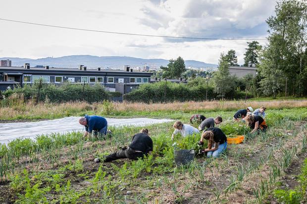 Bilde av folk som gjør dugnad på Tveten andelsgård