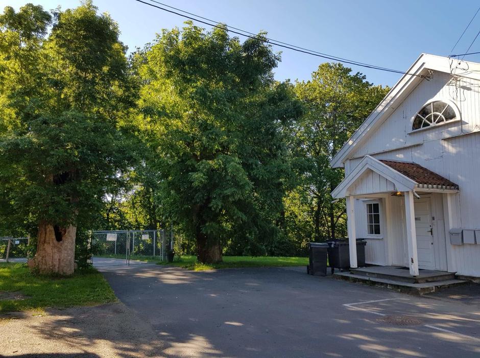 To store grønne trær ved inngangsporten til en hvit gammel bygning.