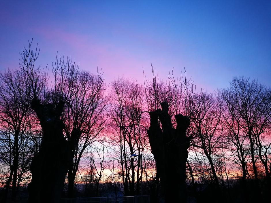 To gamle trær i solnedgang på Bergtunet