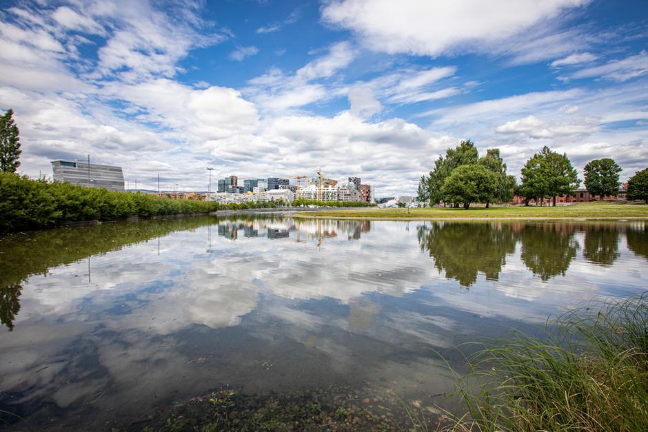 Vannspeilet i Middelalderparken badet i sol fra blå himmel.