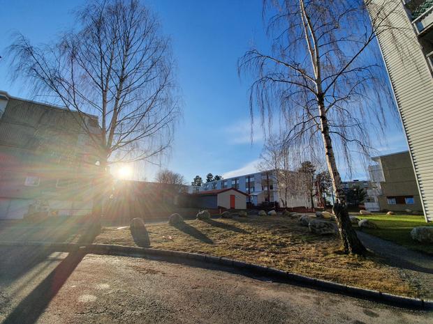 Plen med to trær, bebyggelse i bakgrunn