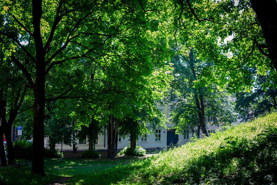 Hus bak trær