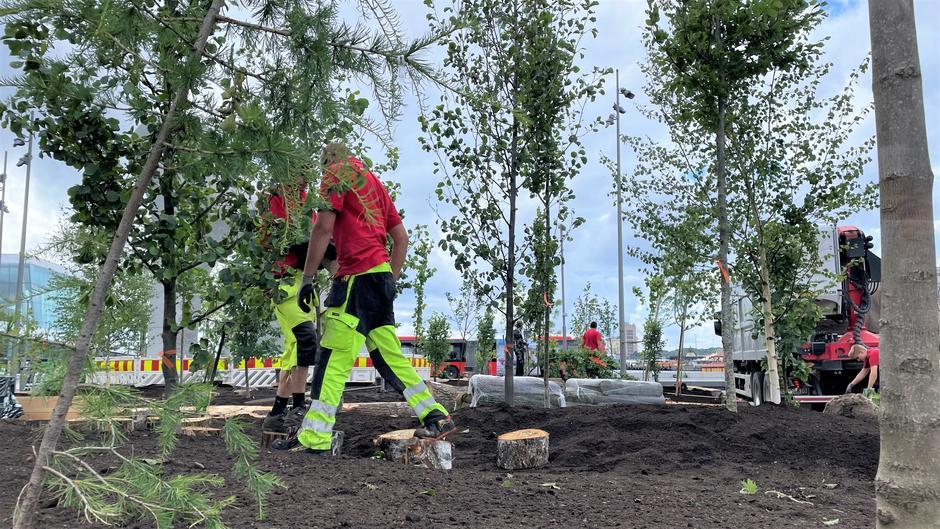 Mennesker i arbeidsklær går på jorda mellom trærne.
