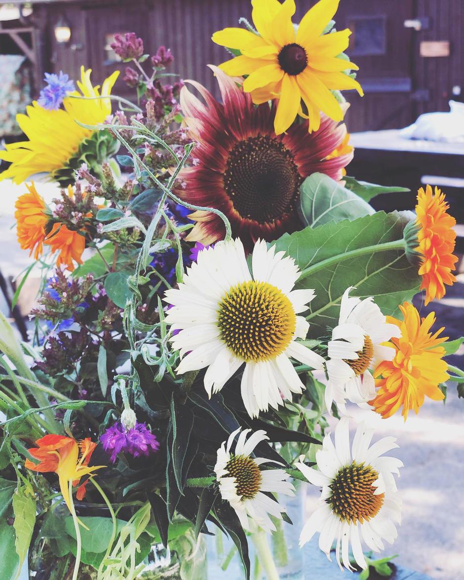 Utvalg av blomster